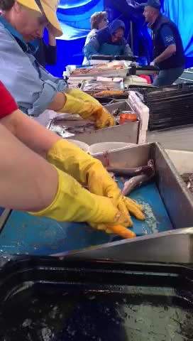 How to clean Dutch Haring (Herring)@Leiden Market
