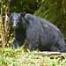 Anan Black Bear_Q2E2612 by bud_marschner