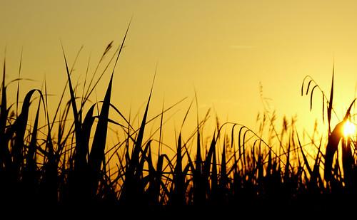 uk light sunset sky sun hot colour reeds sundown harbour silhouettes july dorset heat grasses poole stevemaskell pooleharbour 2013 naturethroughthelens cal14 yahoo:yourpictures=heat