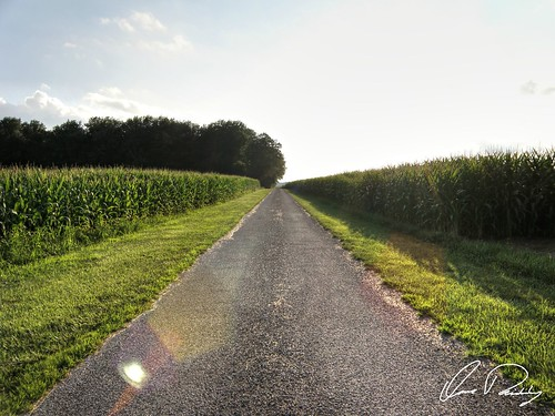 Country Bliss, country, corn, back road, gravel road, middle of nowhere, bliss, cornrows, corn rows
