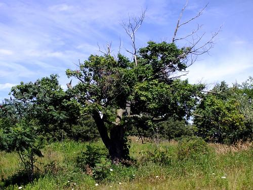 Upper Macatawa Natural Area