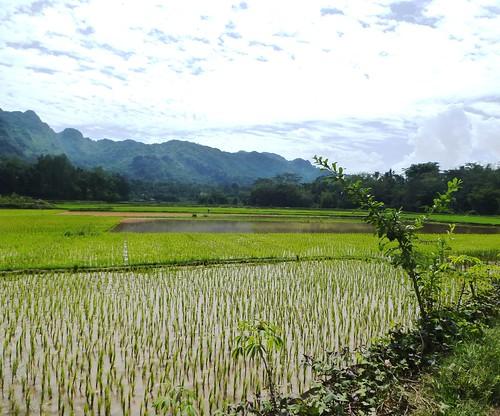 Sulawesi13-Makale-Rantepoao (54)