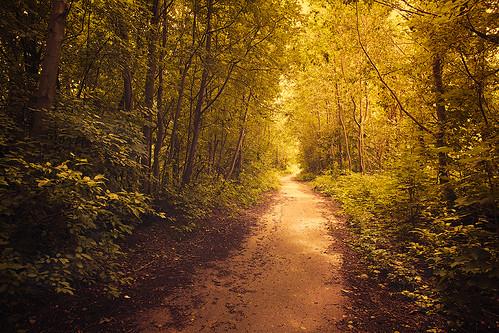 Abandoned path by dyadyavasya