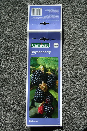 2013-08-06 - Farmlet - 09 - Boysenberry variety Tasman packet