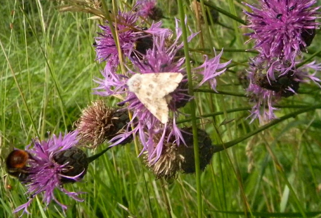 Beige Delight I made that up...... Buff Ermine maybe? I don't know.. Kintbury to Great Bedwyn