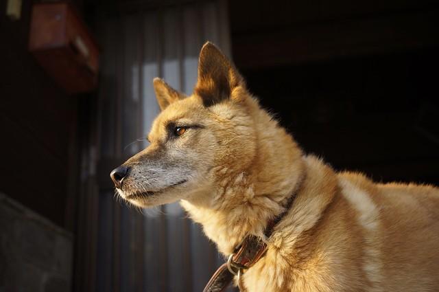 犬の散歩8月2