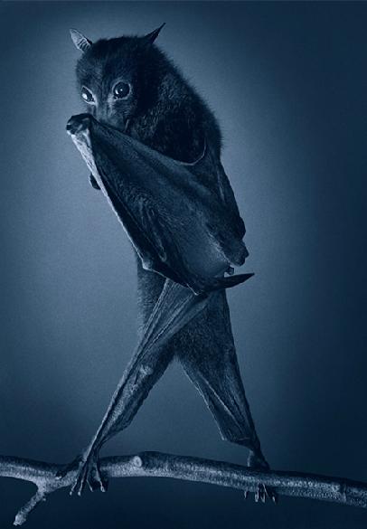 Tim Flach bat