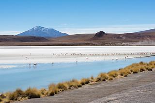 Εικόνα από Laguna Hedionda. flamingo bolivia uyuni tupiza lagunahedionda jamesflamingo tupizatours potosidepartment