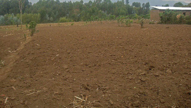 Reraneza Potato Acre