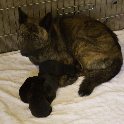 Haru's Fourth Litter