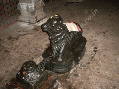Nandi in the Sivan Sannadhi, Thiruvisanallur
