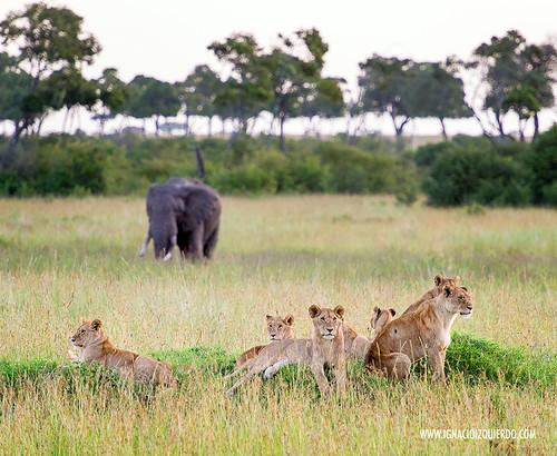 Kenia - Masai Mara 59