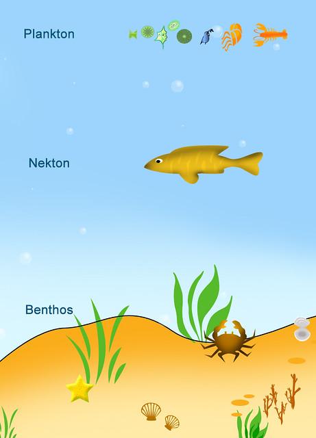 Plankton, Nekton, Bent...