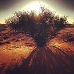 Acacia sunrise. Kalahari Desert, Namibia. One of the perks of a chilly, early morning rise.