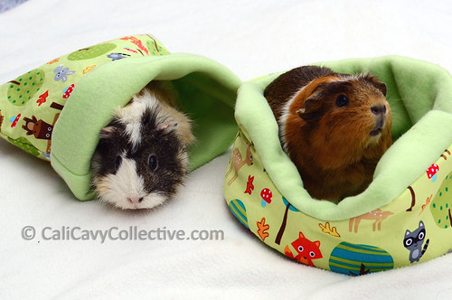 how to make a guinea pig cozy cup