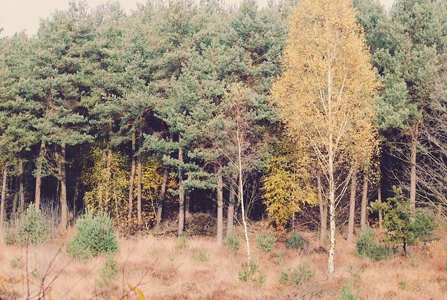 Fall scenes