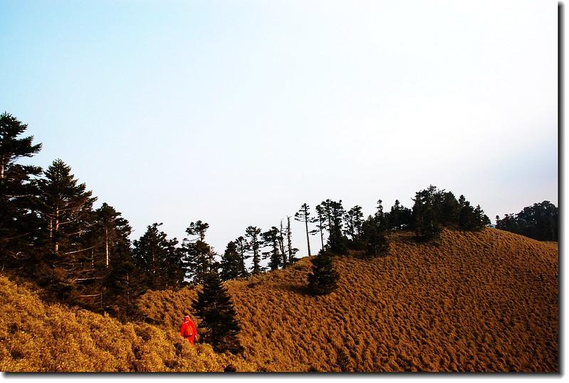 玉山南峰西稜東側草原坡 3