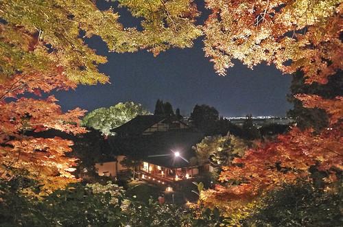 【写真】紅葉 : 青蓮院
