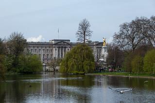 Vue sur Buckingham Palace depuis le St Jame's Park