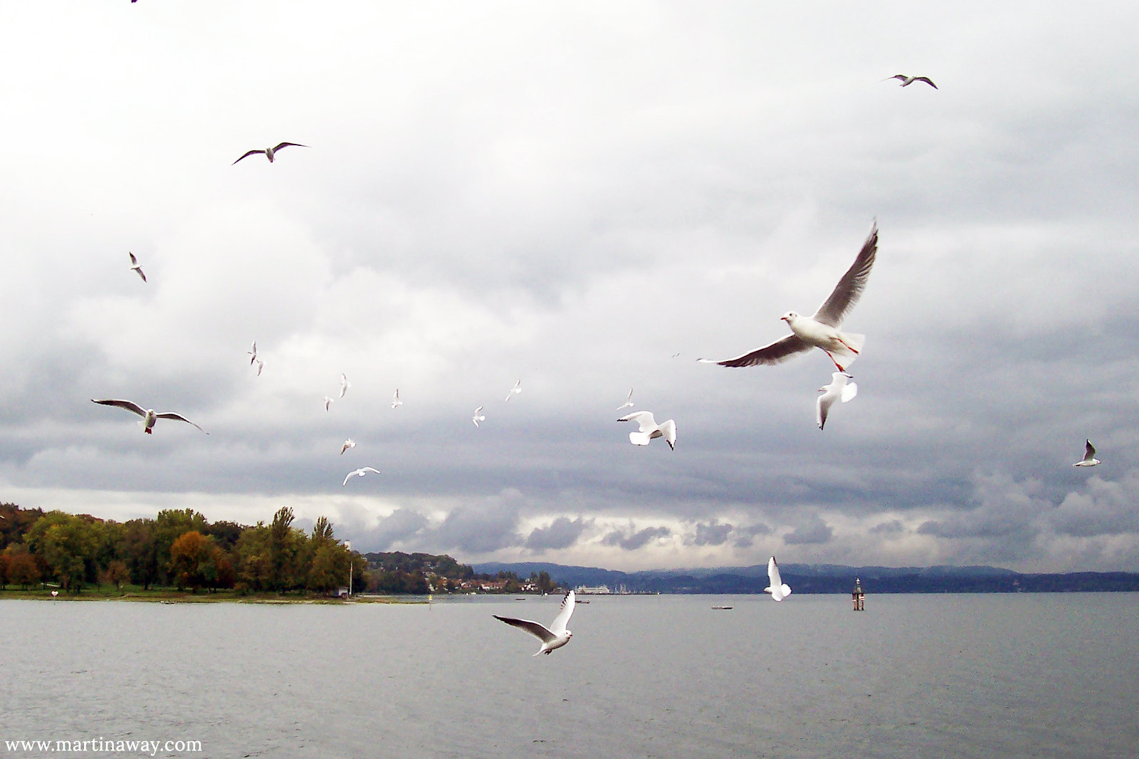 Bodensee and birds.