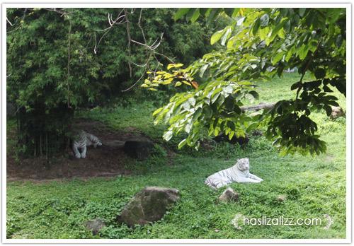 11711481835 9349b2b51d o BERCUTI DI HATYAI THAILAND PART 6   songkhla Zoo