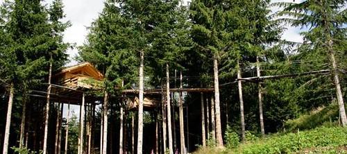 cabane ds les arbres