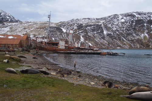 447 Grytviken