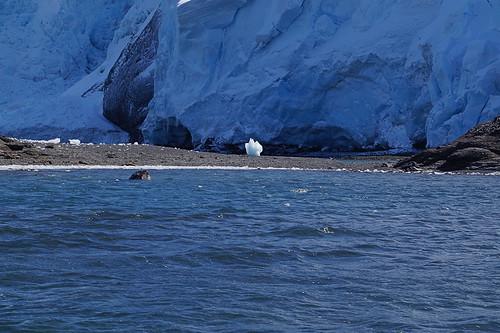 140 King George Island - Zodiaccruise