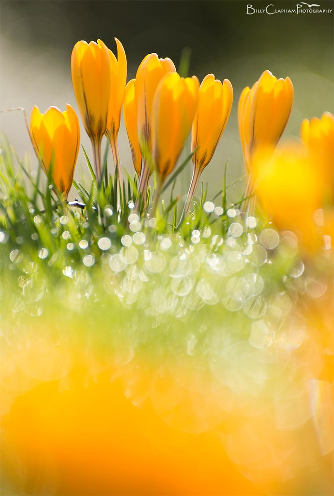 Twinkling amber