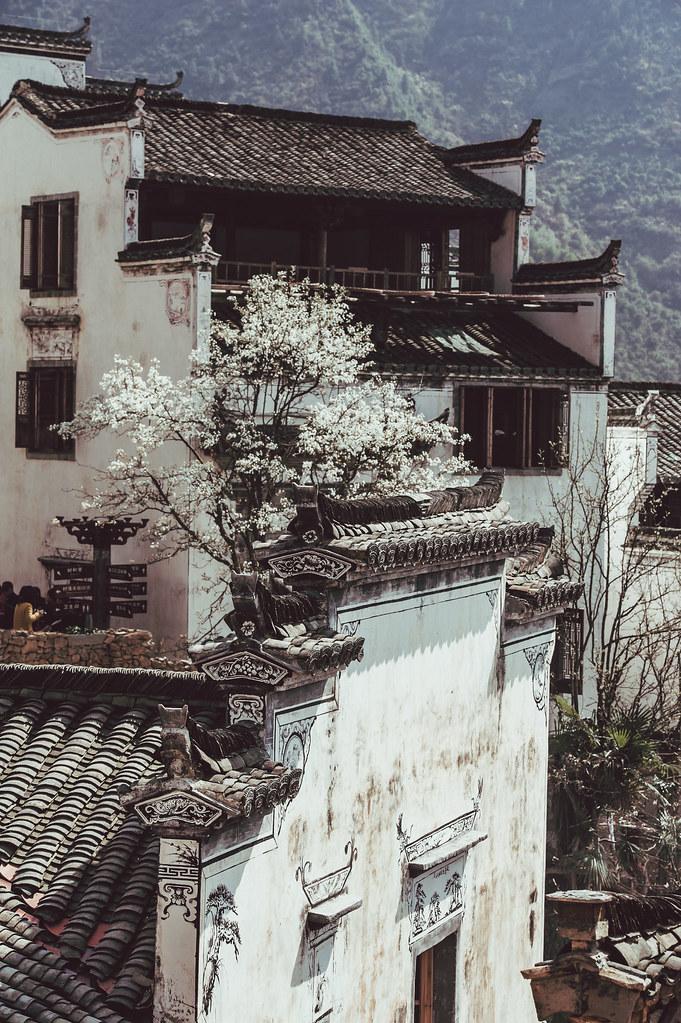 江西婺源油菜花