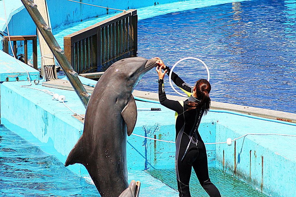 sobre los delfines