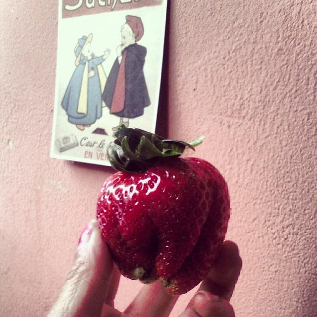 Mon dieu ses fraises sont énormes et sans goût mais belles
