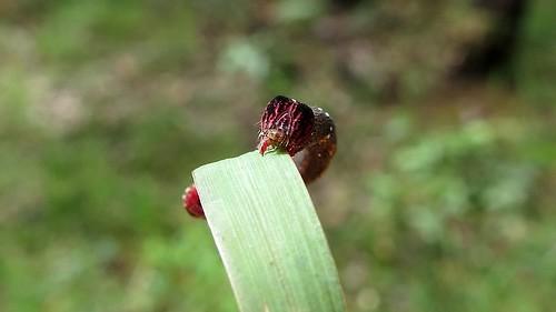 caterpillar face
