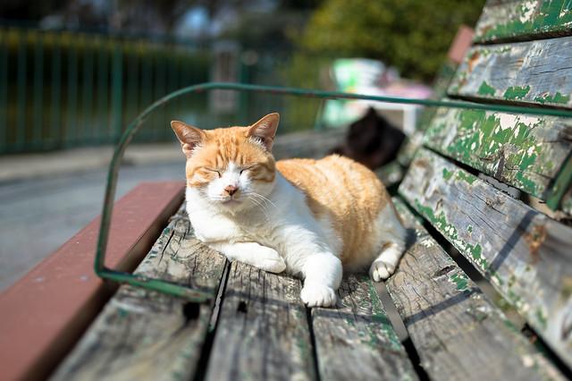 cat_4923, Nikon DF, AF Micro-Nikkor 55mm f/2.8