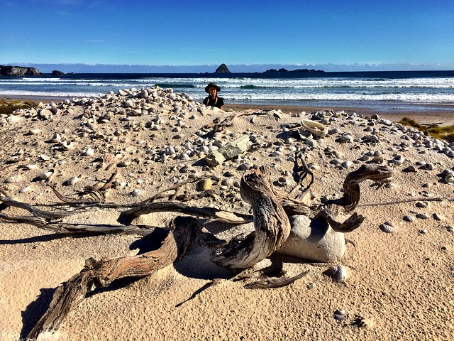 Zoe. Midden. Driftwood. Stephens Beach. South West Tasmania.