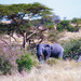 Tanzania by jnhPhoto