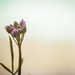 Spring - Flower - 1