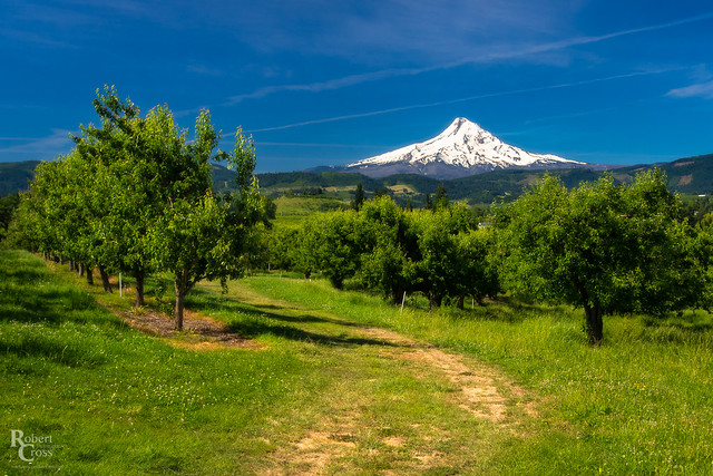 Mount Hood Springtime Orchards