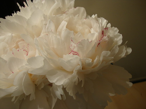 peony flowers from Princeton Farmer's Market