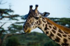 Tanzania-Masek-SafariDrive-50