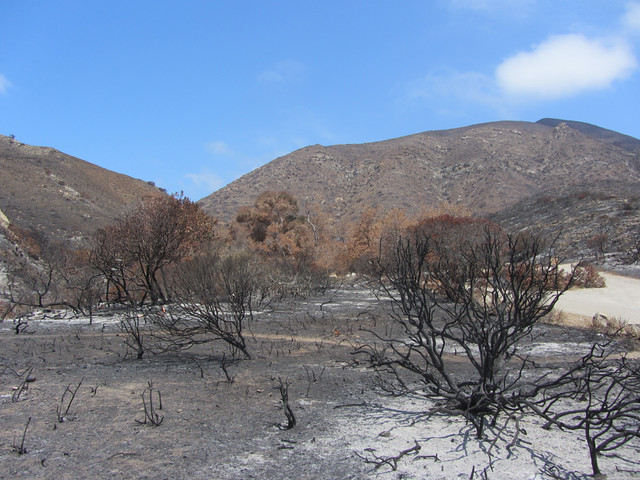 after the springs fire