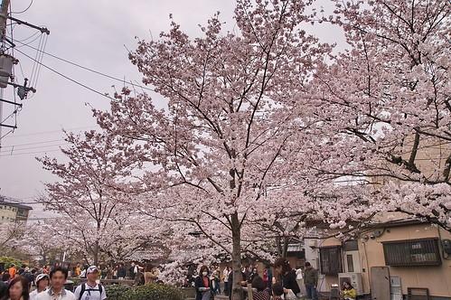 【写真】2013 桜 : 哲学の道/2018-12-24/IMGP9243