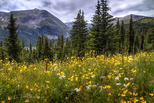usa forest landscape iso100 colorado raw tripod rockymountains wildflowers polarizer f11 breckinridge 17mm hoosierpass mtlincoln elements9 hdri3exp2ev canont4i tamronsp1750vc24 photomatix43
