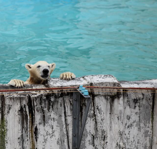 Sapporo Maruyama Zoo 北海道札幌市円山動物園  Explore 皎白筍s photos on F…  Flickr - ...