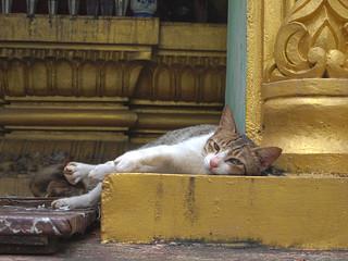 Bild von Sule Pagoda in der Nähe von Shwedagon Pagoda. travel cats architecture cat pagoda feline asia seasia southeastasia buddha yangon burma religion buddhism felines myanmar spirituality spiritual burmese rangoon sule sulepagoda