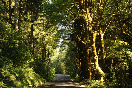 Duckabush river road, temperate rain forest, trees, Olympic National Park, North Hood Canal, Washington, USA by Wonderlane