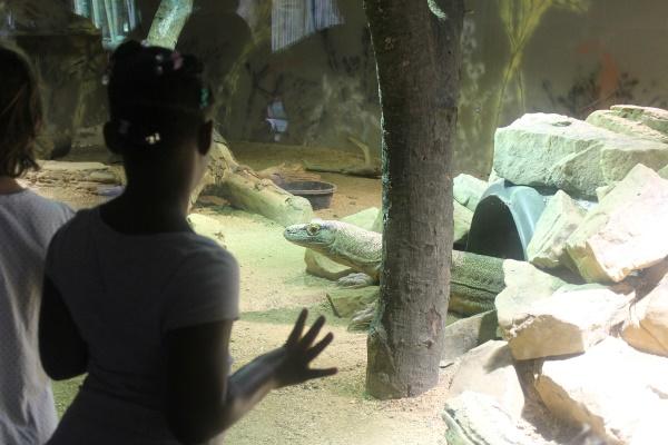 Atlanta Zoo '13, 9