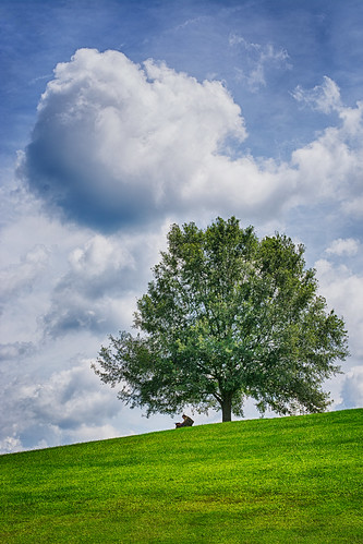 cloud tree 50mm virginia nikon hill sunny charlottesville hdr odc d7100 lvnative