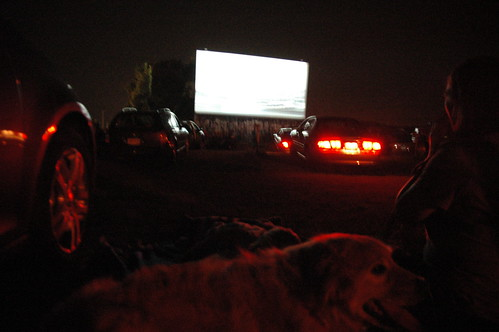 day 3339: odin and pushkin enjoy their first ( and maybe last ) drive-in movie.