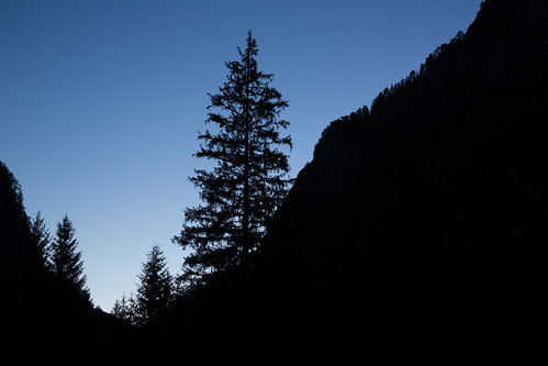 Birnam Wood Is Come To Dunsinane (Twilight Silhouette Firs), Logarska Dolina by flatworldsedge